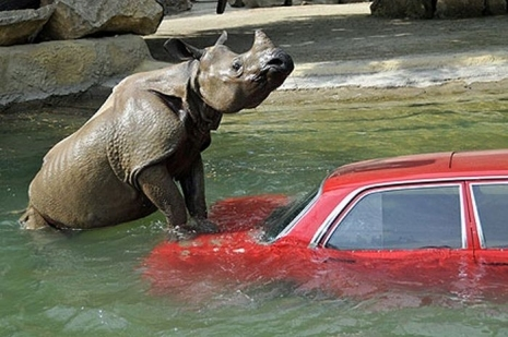 When Animals Attack Cars Ais Auto Insurance Specialists
