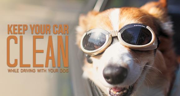 dog-proof-car