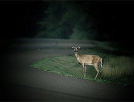 driving-tips-deer-night