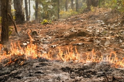 Wildfires and Your California Car Insurance