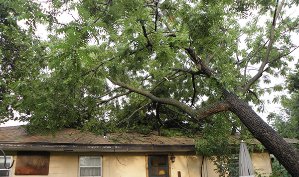 How Does Home Or Auto Insurance Work If A Tree Falls On My Home or Car?