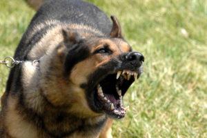 renters insurance - dog bite