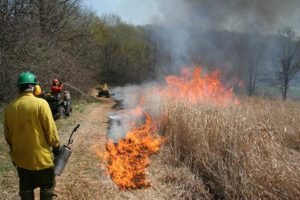 wild land firefighters controlled wildfires