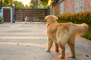 umbrella policy for dog owners