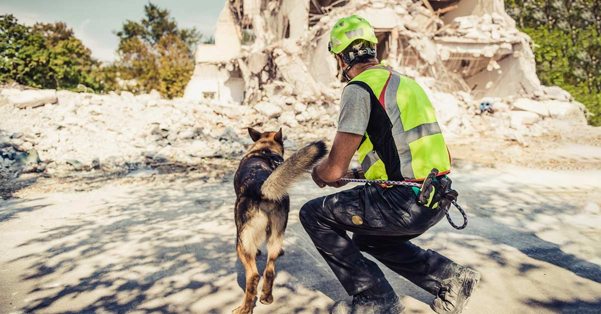 earthquake - rescue dog